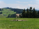 Appenzell_2018_047